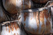 Free Tree Shell Stock Photography - 5372112