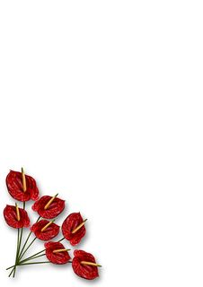 Free Corner Anthurium Stock Photography - 5372232