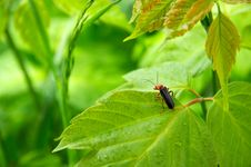 Free Bug On Leaf Royalty Free Stock Photography - 5372537