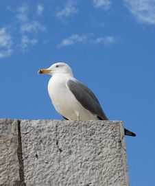 Free Sea Gull On The Roof Royalty Free Stock Images - 5373359