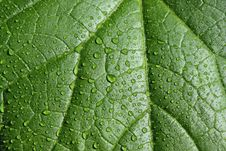 Free Leaf With The Drops Royalty Free Stock Image - 5373406