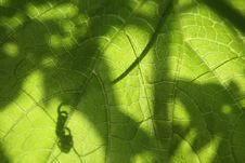 Free Leaf With The Shadows Royalty Free Stock Photo - 5373505