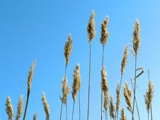 Free Grass And Sky Royalty Free Stock Photo - 5373865