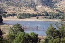 Free Lake And Vegetation Stock Images - 5374064
