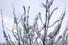 Free Winter Royalty Free Stock Photos - 5374088