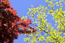 Free Bright Sunny Leaves Royalty Free Stock Photography - 5374217