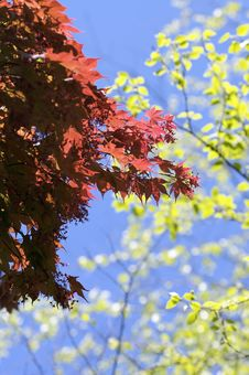 Free Bright Sunny Leaves Royalty Free Stock Images - 5374219
