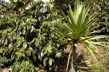 Free Tropical Plants, Guatemala Royalty Free Stock Image - 5374646