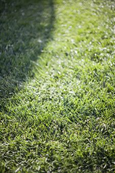 Free Grass Background Stock Photos - 5374923