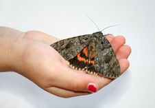 Free Moth In Hand Royalty Free Stock Photography - 5375037