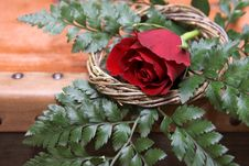 Free Red Rose Royalty Free Stock Photo - 5375055