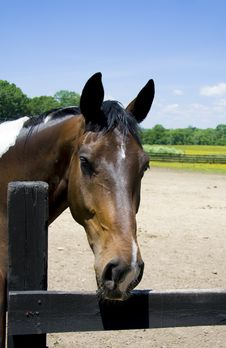 Free Black And White Paint Horse Stock Photo - 5375090