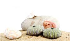 Free Sand And Echinus Royalty Free Stock Image - 5375916