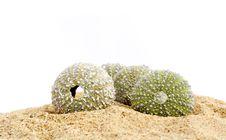 Free Sand And Echinus Stock Photography - 5375952