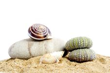 Free Sand And Echinus Royalty Free Stock Photography - 5375957
