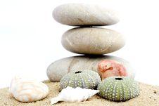 Free Sand And Echinus Stock Image - 5375961