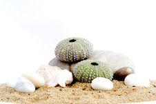 Free Sand And Echinus Royalty Free Stock Photos - 5375968