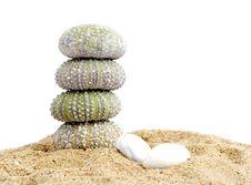 Free Sand And Echinus Stock Photos - 5375973