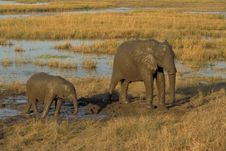 Free Muddy Elephants Stock Photo - 5377380