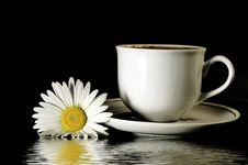 Free Beautiful Camomile And Cup Stock Photo - 5377450