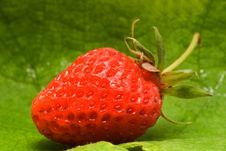 Free Strawberry On Sheet Stock Photography - 5377592