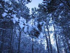 Free The Siberian Taiga Royalty Free Stock Image - 5377716