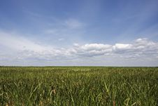 Free Blue Sky And Green Field Royalty Free Stock Photo - 5377845