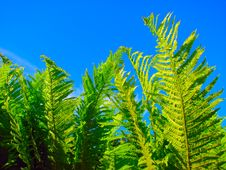 Free Fern Stock Images - 5377914