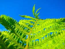 Free Close Up Fern Stock Photo - 5377920