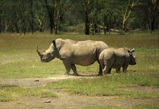 Free Mother And Baby Rhino Royalty Free Stock Photography - 5378237
