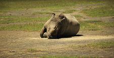 Free Sleeping Rhino Stock Image - 5378311
