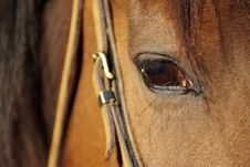 Free Horse Detail Stock Images - 5379264