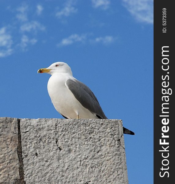 Sea gull on the roof