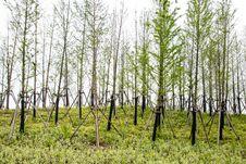Free Roadside Trees Royalty Free Stock Photo - 53700005