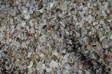 Free Shells On One Of The Beaches Are Of The Black Sea Royalty Free Stock Image - 53718966
