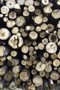 Free Timber Cutting Royalty Free Stock Photo - 5382035