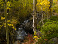 Free Autumn Colors And Brook Royalty Free Stock Image - 5383196