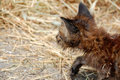 Free Hunting Stray Kitten Royalty Free Stock Image - 5388336
