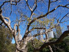 Free Sydney Tree Royalty Free Stock Image - 5381636
