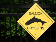 Free Salmon Crossing Royalty Free Stock Photo - 5381795