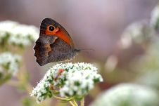 Free Close-up Shot Of A Butterfly Stock Photo - 5381890