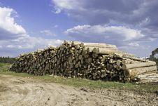 Free Timber Cutting Stock Photos - 5381963