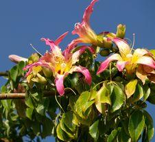 Free Beautyfull Blossom Stock Photos - 5382273