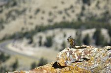 Free Chipmunk On The Ledge Stock Photos - 5382733