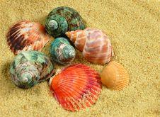 Seashells And Sand Stock Photography