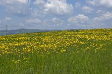 Free Green Field And Yellow Flowers Tree Stock Photography - 5382872