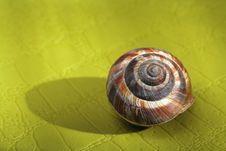 Free Empty Snail Shell Royalty Free Stock Photos - 5382938