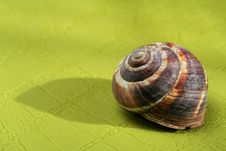 Free Snail Shell On Green Surface Royalty Free Stock Photos - 5383028