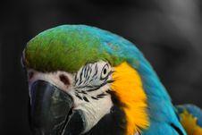 Free Macaw Close Up Stock Photos - 5383783