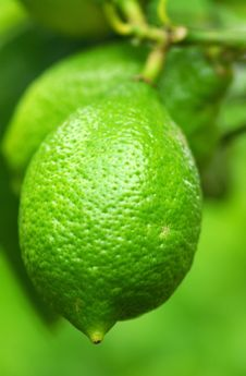 Free Green Lemon. Royalty Free Stock Photo - 5384175